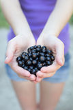Blackcurrants Royalty Free Stock Images