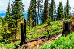 Blackened Tree due to Lightning Strike in the high Alpine of Tod Mountain in the Shuswap Highlands. Of British Columbia, Canada stock photography