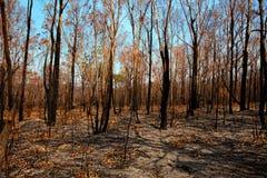 Blackened trees and bushland after bushfire Stock Photo