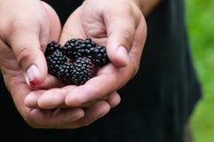 Blackerry Geben Lizenzfreies Stockbild