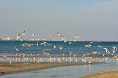 Blacket Sea seglar utmed kusten och naturen, Rumänien Arkivbilder