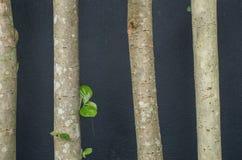 Blackground degli alberi Immagini Stock Libere da Diritti