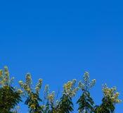 Blackground do céu amarelo e azul da flor Fotos de Stock Royalty Free