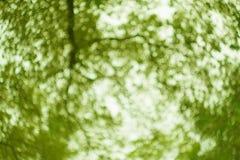 blackground giallo vago dell'albero Fotografie Stock Libere da Diritti