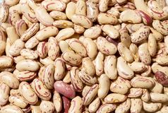 Blackground of textured bean Stock Photography