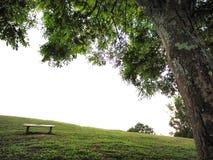 Blackground verde del campo imagen de archivo