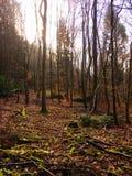 Blackheath skog, Albury, Guildford, Surrey Arkivbilder
