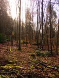 Blackheath-Wald, Albury, Guildford, Surrey stockbilder