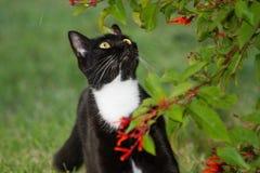 Blackie il gatto Immagini Stock Libere da Diritti