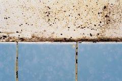Mold in the bathroom Stock Photos