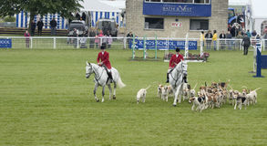 Blackmore & Sparkford Vale Foxhounds at Royal Bath and West show 2014 Royalty Free Stock Image