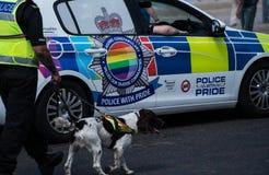Police and Police dog at Blackpool Pride festival. Blackpool, United Kingdom - 09.06.2018 Police and English Springer Spaniel at Blackpool Pride festival royalty free stock image