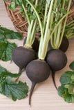 Blackradish Стоковое Изображение RF