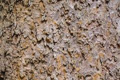 Blackround da textura da casca da natureza Foto de Stock Royalty Free