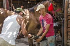 Blacksmith fastening a horseshoe. On a horses hoof Stock Photo