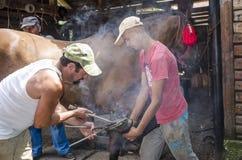 Blacksmith fastening a horseshoe. Blacksmith fastening a hot horseshoe on a horses hoof Royalty Free Stock Photo