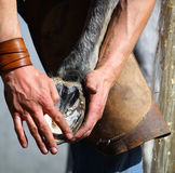 Blacksmith hands and horse leg Royalty Free Stock Images