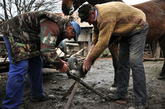 Blacksmith shoeing a horse. LUPENI - APRIL 19: Unidentified blacksmith, farrier shoeing a horse. Such type of smithery techniques are very rare in Romania. On Stock Photos