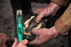 Blacksmith shoeing a horse. LUPENI - APRIL 19: Unidentified blacksmith, farrier shoeing a horse. Such type of smithery techniques are very rare in Romania. On Royalty Free Stock Images