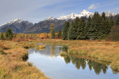 Blacktail池塘在秋天的反射Tetons, nat盛大的Tetons 免版税库存图片