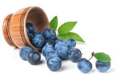 Blackthorn berries in a wooden bowl isolated on white background Royalty Free Stock Photo