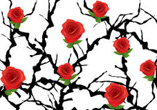 Blackthorn bush with roses Stock Image