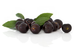 Free Blackthorn Fruit Stock Photography - 12351712
