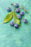 Blackthorn fruits over painted textile background Royalty Free Stock Photography