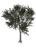 Blackthorn or sloe tree - 3D render Royalty Free Stock Image