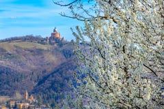 Blackthorn tree background bologna in spring - San Luca Colli Bolognesi area - Italy stock photo