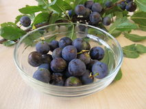 Blackthorn twig an a bowl of sloe fruits Stock Photography