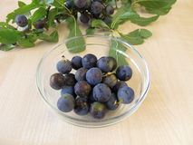 Blackthorn twig an a bowl of sloe fruits Stock Photos