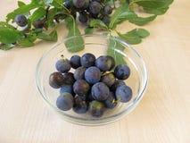 Blackthorn twig an a bowl of sloe fruits Stock Photos