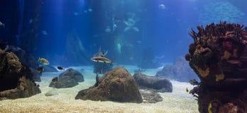 Blacktip hajar och annan tropisk fisk i deras oceaniska miljö arkivfoto