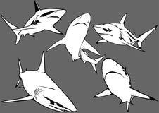 Blacktip Reef Shark Set Royalty Free Stock Photography