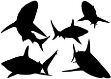 Blacktip Reef Shark Silhouettes. (Carcharhinus melanopterus) - Illustration, Vector Stock Images