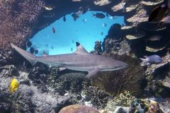 blacktips Royaltyfria Bilder