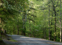 Blacktop road through a forest Stock Images