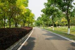 Blacktop road in verdant trees of sunny summer Royalty Free Stock Photos