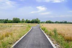 Blacktopped Straße der Landschaft auf den Weizengebieten des sonnigen Sommers achtern Stockfoto