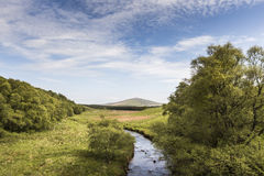 Blackwater and Buck in the Cabrach in Scotland. Stock Photo