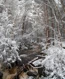 Blackwater State park trail with snow and ice Royalty Free Stock Images