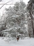 Blackwater State park trail with snow and ice Stock Photo