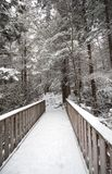 Blackwater State park trail with snow and ice Stock Image