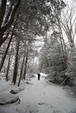 Blackwater State Park trail in Snow Royalty Free Stock Photo