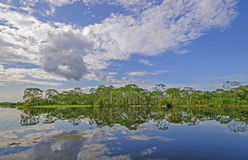 Blackwater tributary in the Amazon on a Sunny Day Royalty Free Stock Image