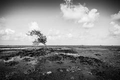 Blackwhite fotopanorama av Padang underbara indonesia arkivbilder