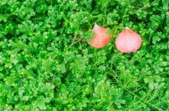 Blad av den röda blomman Arkivbild