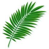 Blad av en tropisk palmträd stock illustrationer