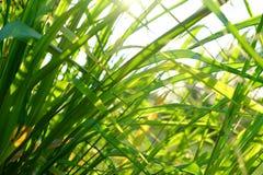 Blad av en växt på vägrenen Arkivfoton